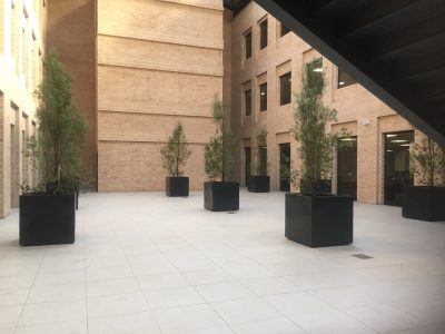 Old Mutual Insure Cube Planters 4