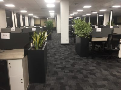 Old Mutual Insure Office Planters